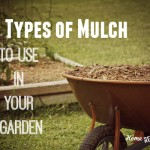 6 Types of Mulch to Use in Your Garden